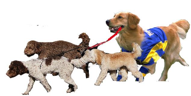Airbud-dogwalker