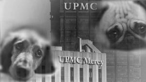 upmcpuppyeyes