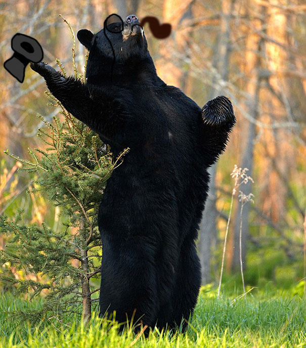 funny-bears-doing-human-things-34