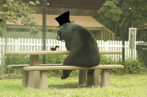 The hardships of being a dapper bear